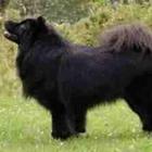 Lapphound suedez